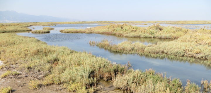 Fish, Flows, and Desire in the Delta