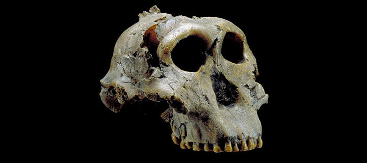 What Can Fossils Tell Us about Early Human Diets?