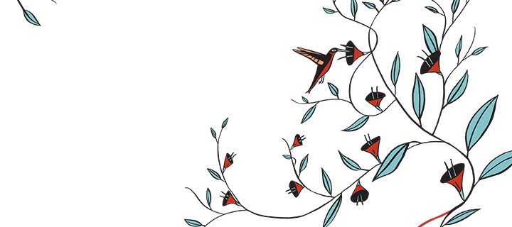 illustration of humming bird pollinating a flower on a vine