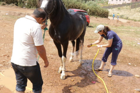 A man holds the reins of the horse while Amal, in jeans and a t-shirt, points a hose at the horse's stomach.