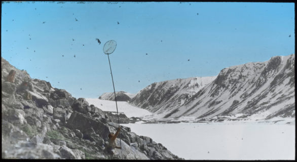An individual stands on a rocky slope, the valley below covered in snow. The individual reaches a long pole with a net attached to the end up into the sky to try to catchone of the many birds flying around.