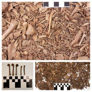 Three different photos show shallow piles of bird bones.