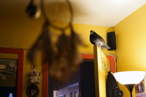 The pigeon perches on top of a door that opens into a bedroom. Clothing hangs on the back of the door, and a dream catcher punctuates the foreground.