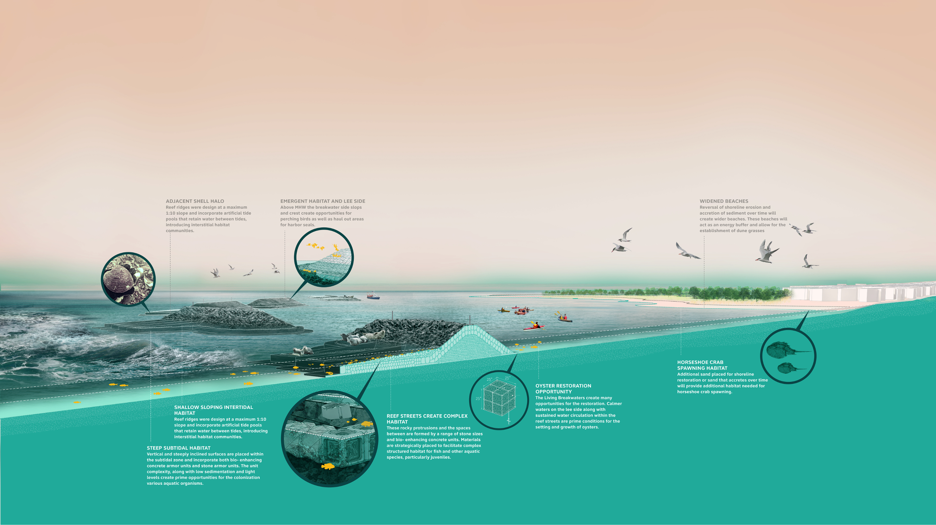 A schematic that illustrates, describes, and explains the different components of the Living Breakwaters.
