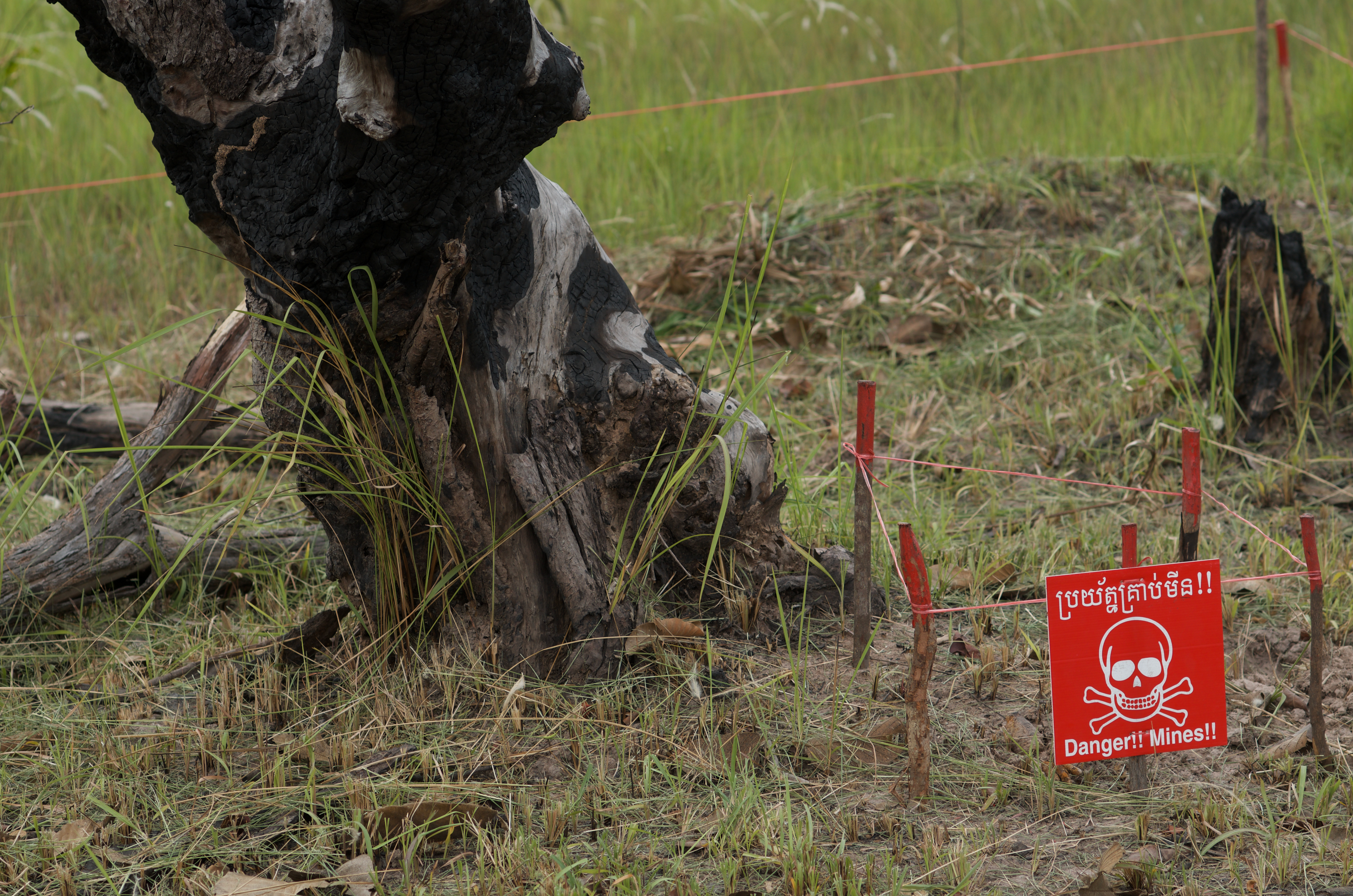 "A photograph of a green field with a tree trunk growing out of it. In front of the tree, there is a red sign with a drawing of skull and crossbones and text reading ""Danger!! Mines!!"""