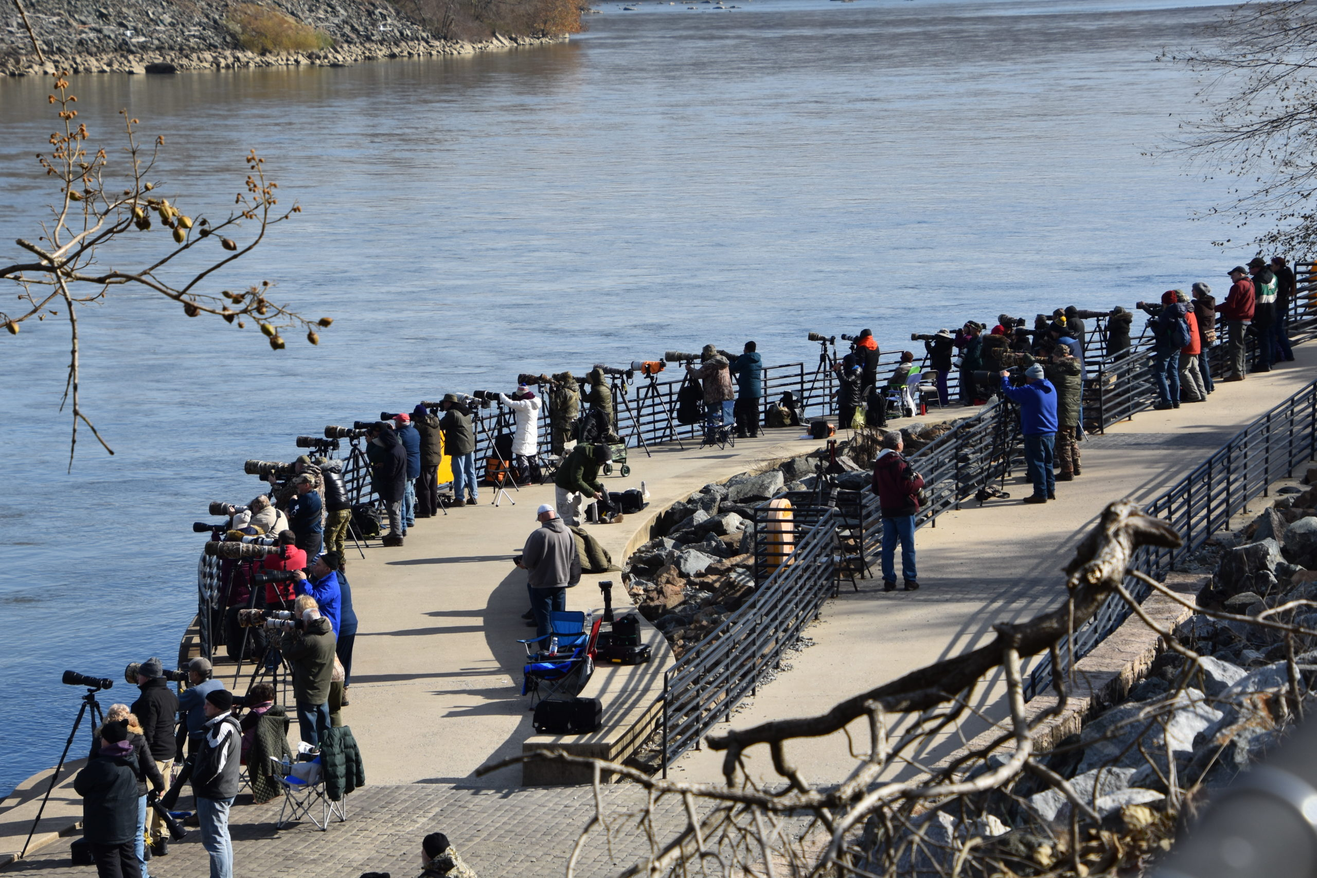Photograph of a relatively large group of bald eagle watchers at Conowingo Dam on the Susquehanna River in Maryland.