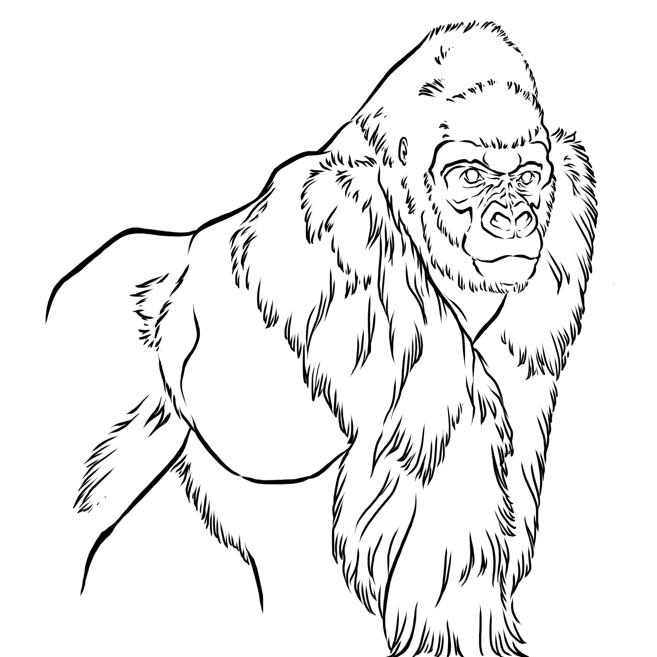 Black and white line drawing of a gorilla
