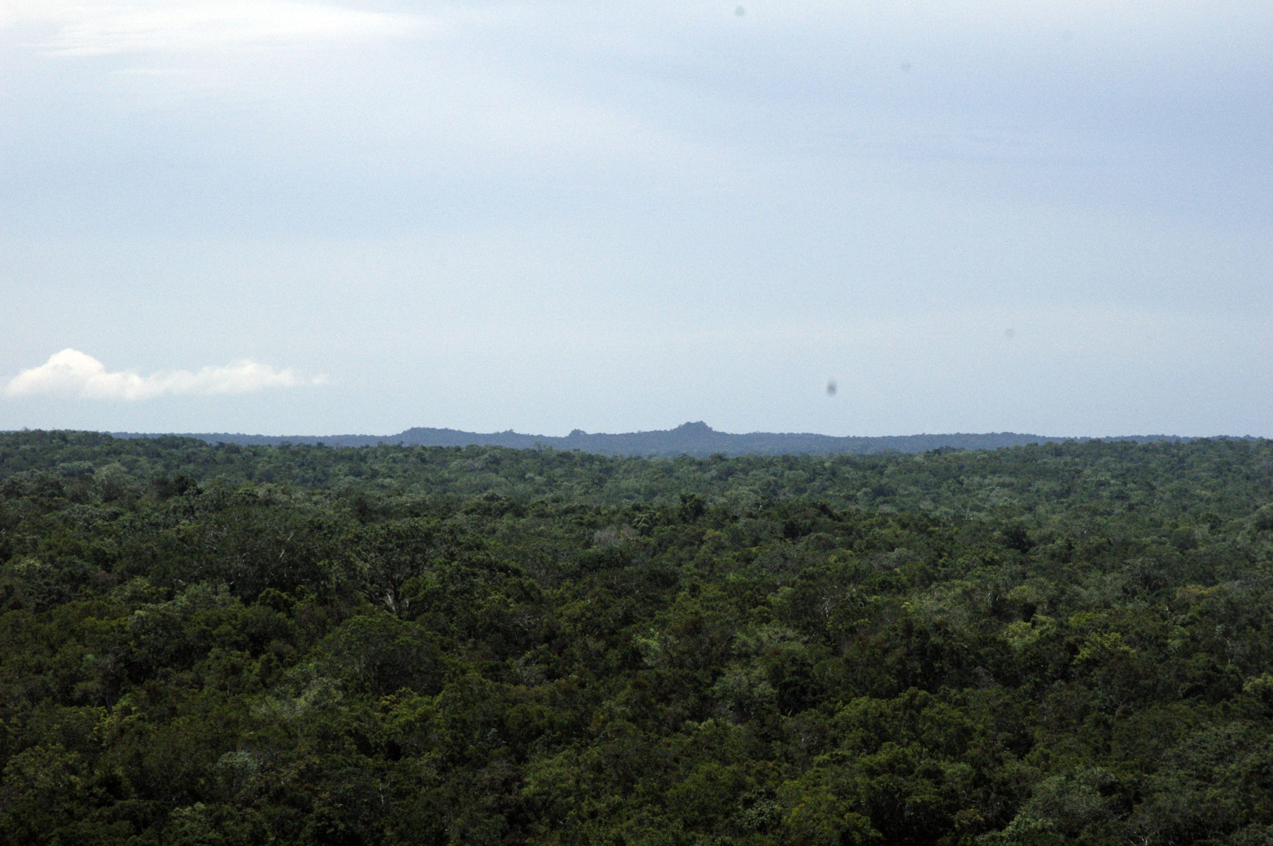 The photograph shows the green dense forest surrounding the Preclassic site of Nakbé which can be seen in the horizon from El Mirador's La Danta pyramid.