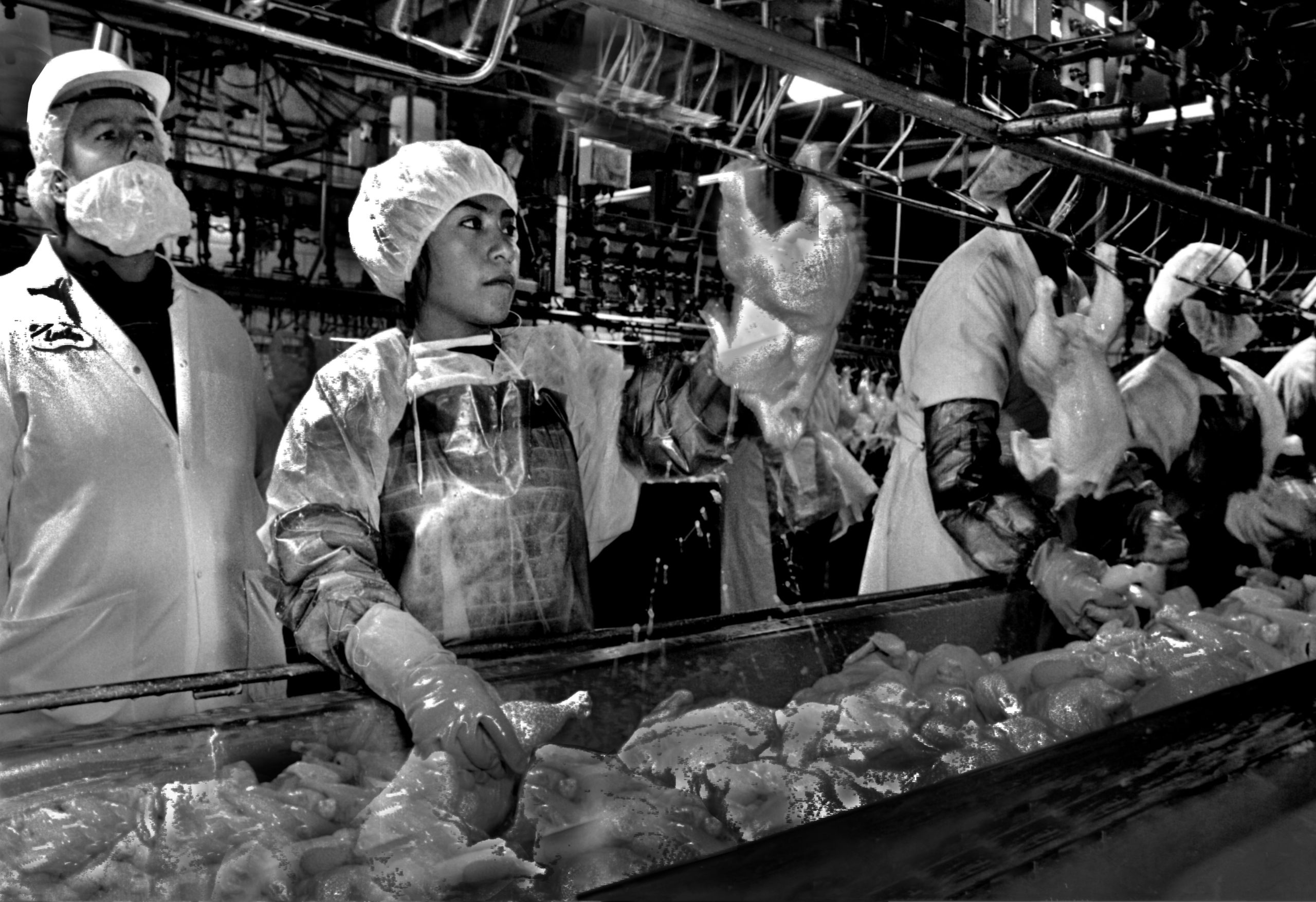Black and white photo of workers on a poultry processing line.