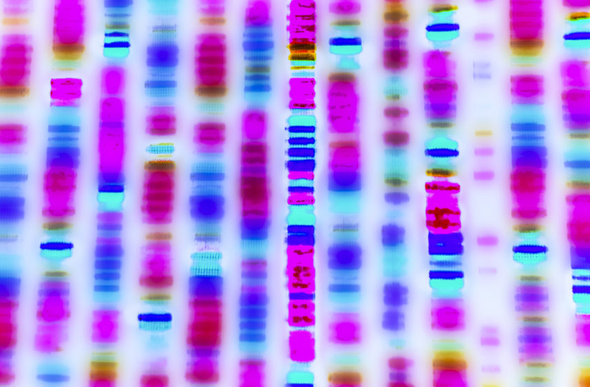 Graphic representation of the DNA sequence.
