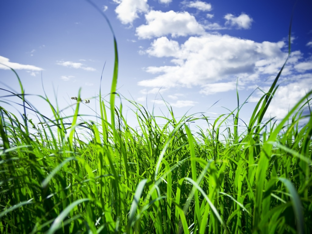 Image of green grass and sky