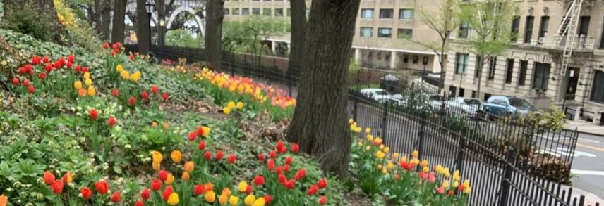 Photograph of flowers outdoors in a city