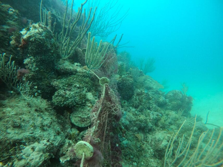 A picture of fishing net stretching over a reef