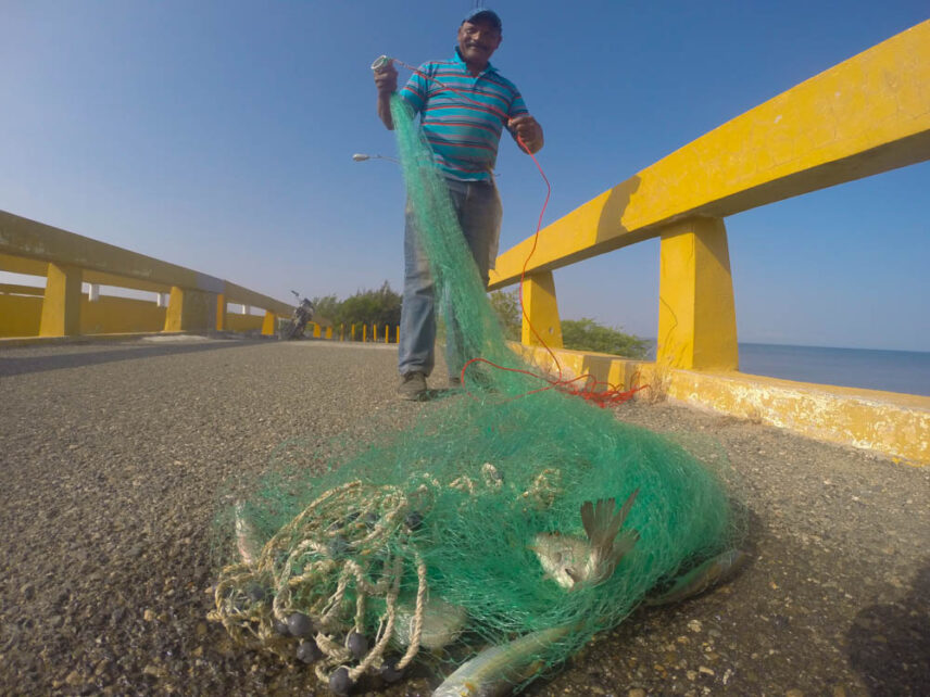 A picture of a fisherman displaying his catch